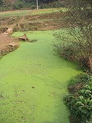180px-River_algae_Sichuan.jpg