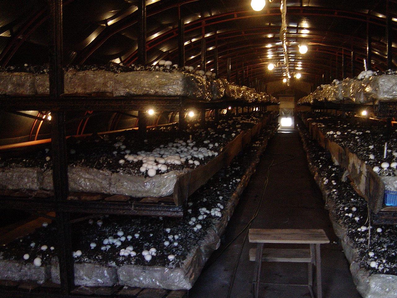 Теплицы для грибов вешенок: от теории к практике 3