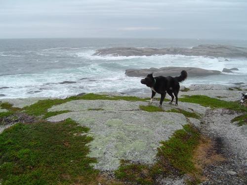 halifaxNS+dog.jpg
