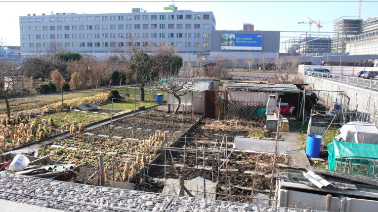 zurich garden + develp.png